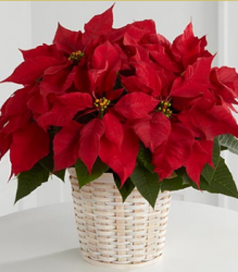Red Poinsettia Basket picture.PNG