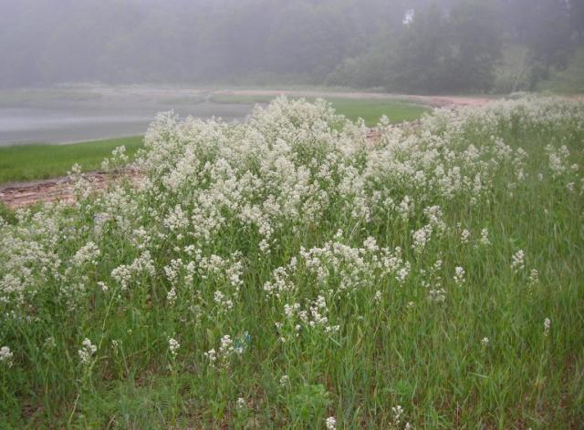 White flower field imagesg mightylinksfo