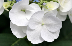 Photo of white flowers garden.PNG