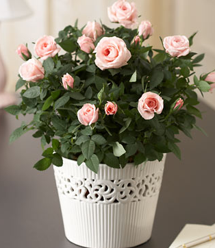 valentine gift flowers with cute small light roses.PNG