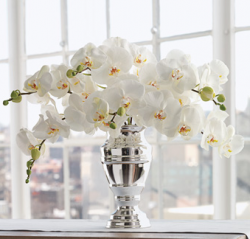 White Phalaenopsis Orchid Bouquet picture.PNG