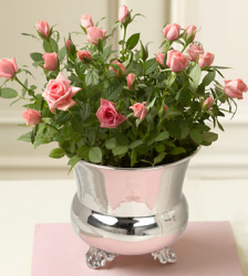 Light small roses valentines flowers with silver pot.PNG