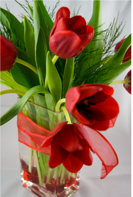 Red+tulips+valentines+flowers+in+glass+vase