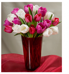 Tulips flowers for valentines day multi colors.PNG