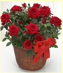 Romance red roses valentine basket.PNG