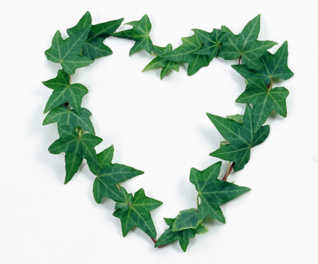 Green leaves heart shape valentine gift idea.PNG