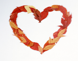 Orange leaves valentine heart shape.PNG