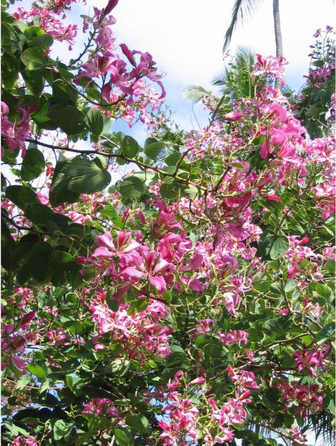 Light pink hawaiian flowers treeg hi res 720p hd light pink hawaiian flowers treeg mightylinksfo
