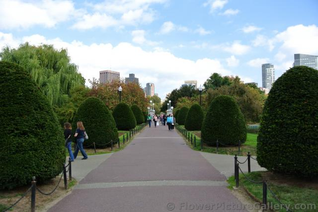 Sculpted trees line pathway to bridge at Boston Public Garden.jpg