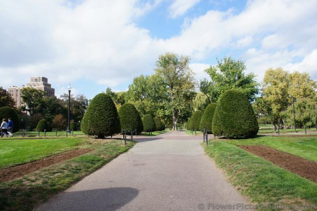Sculpted trees line pathway at Boston Public Garden.jpg