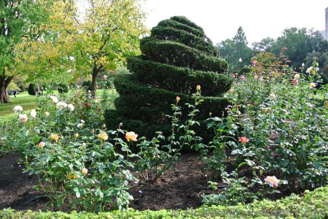 Rose garden with sculpted tree in the middle at Boston Public Garden.jpg