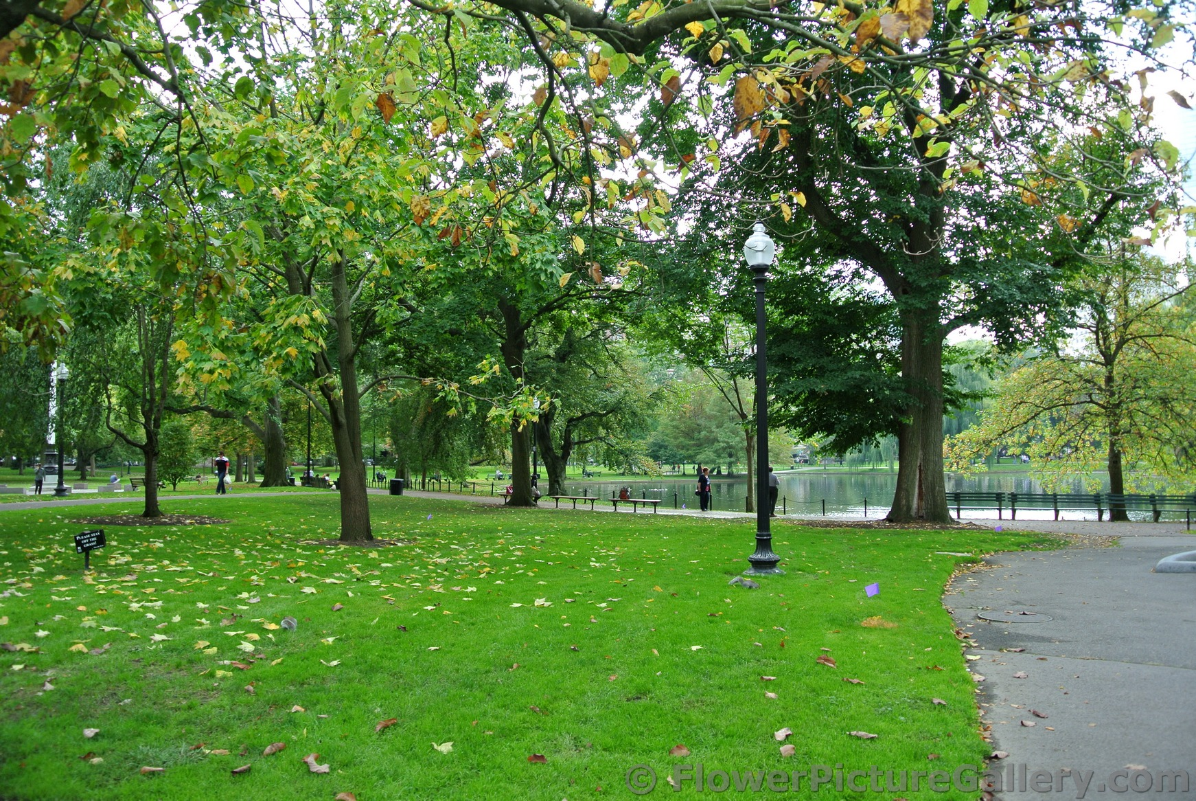 Green grass and trees with pond in background at Boston Public Garden.jpg