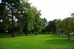 Grassy valley between mountains of trees at Boston Public Garden.jpg