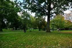 Grass littered with fall foliage leaves at Boston Public Garden.jpg