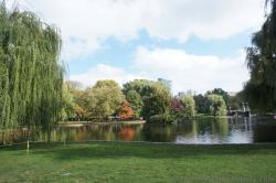 Boston Public Garden pond and trees.jpg