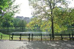 Benches and tree in front of pond at Boston Public Garden.jpg