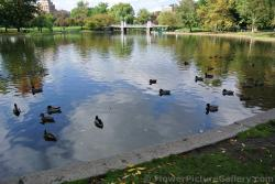 Boston Public Garden ducks in pond.jpg