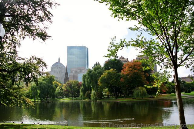 Beautiful trees and pond of Boston Public Garden.jpg