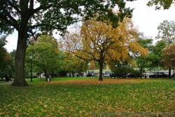 Beautiful fall foliage trees at Boston Public Garden.jpg