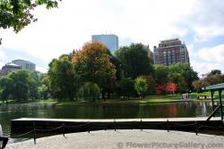 Swan Boats dock at Boston Public Garden.jpg