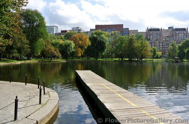 Swan Boats dock and pond of Boston Public Garden.jpg