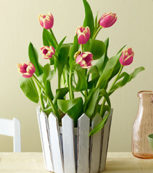 Pretty flowers on the budget with this cheap mother's day flowers gift.PNG