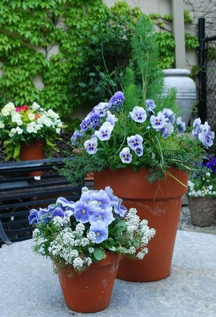 Beautiful planters with flowers and herbs pictures.JPG