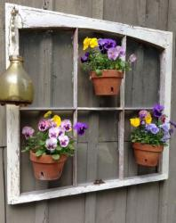 Unique garden decor with pansies flowers in pots hanging on the old window.JPG