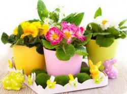 Cute little Easter flowers planters pictures.JPG