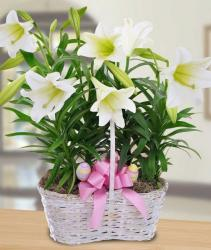 Easter flowers basket with white lilies Easter flowers and colorful Easter eggs and pink bow.JPG