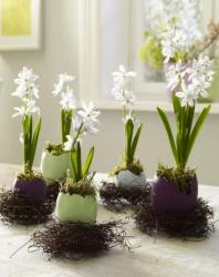 Egg in bird nests with cute white little Easter flowers.JPG