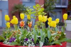 Large Easter flowers with many different flowers in big planter in red.JPG