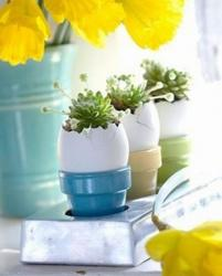 Three egg planters with catus flowers picture.JPG
