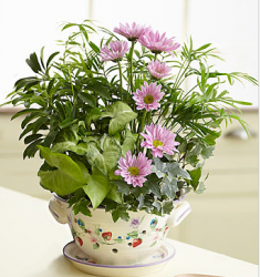 Bowl Dish Garden for mother's day.PNG