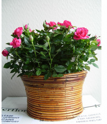 Baby roses in tan basket for moms.PNG