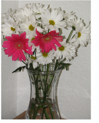 Daisy flowers with hot pink flowers for mother's day.PNG