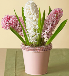 Have these flowers delivered for mother's day with Fragrant Hyacinth Garden.PNG