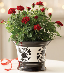 Have this Rose in Modern Elegance Planter flowers delivered on mother's day will make her so happy.PNG