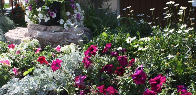 Private summer garden flowers photos.JPG