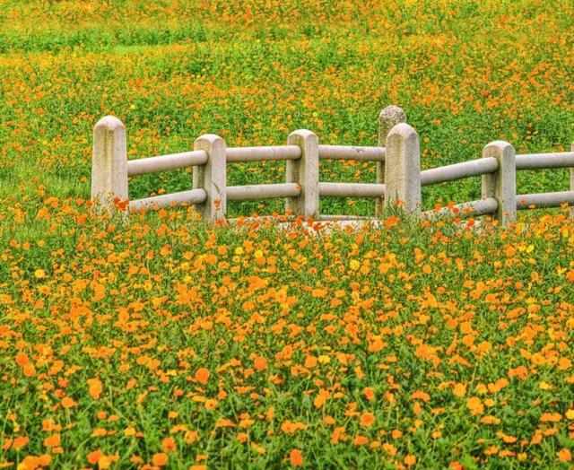 Yellow orange wild flowers pictures.JPG