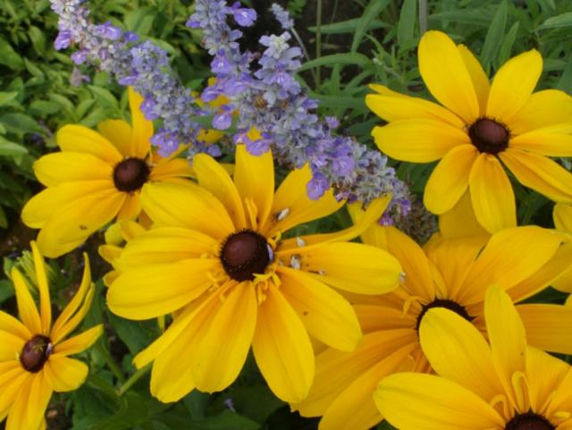Bright colored summer flowers pictures.JPG