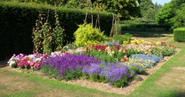 Large summer garden bed with bright colored beautilful flowers.JPG