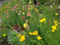 Summer flowers beds pictures.JPG