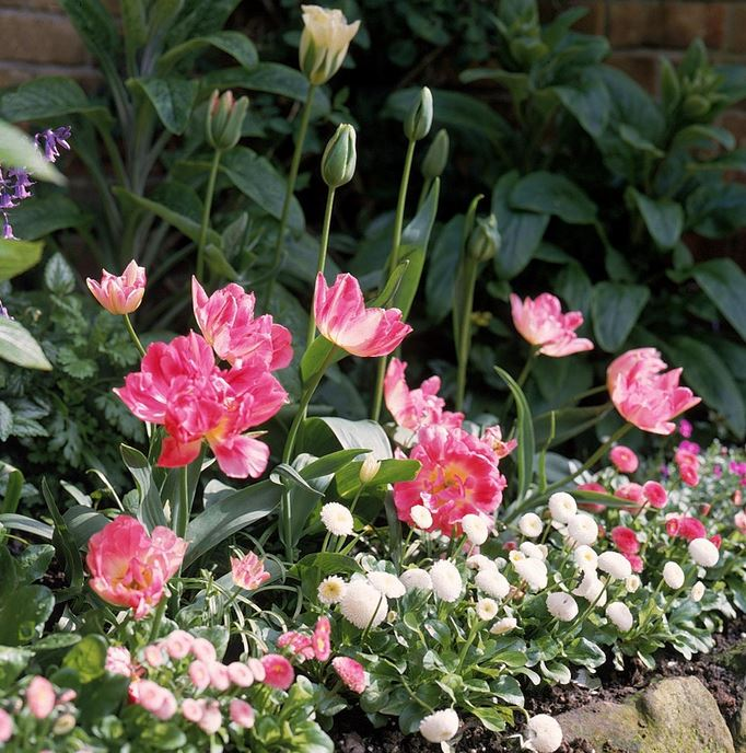 Summer flowers garden pictures.JPG