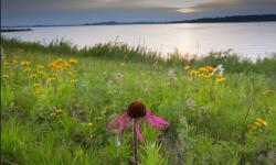 Summer flowers with beautiful wild flowers photos.JPG