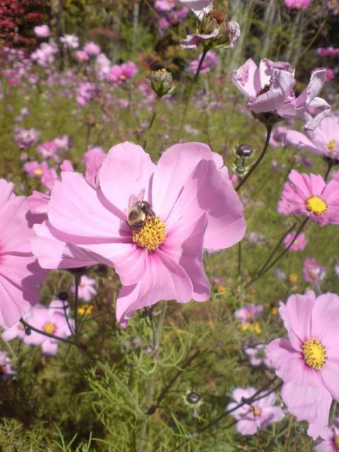 summer pink flowers images jpg