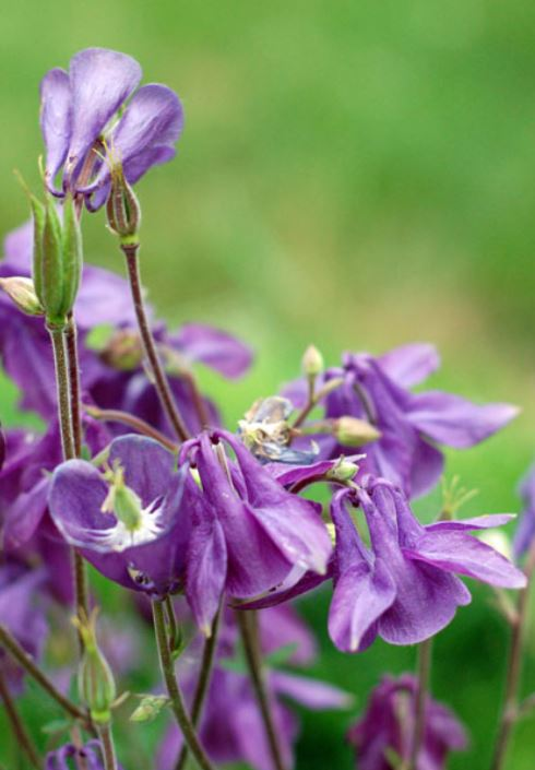Summer purple flowers images.JPG