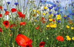 Summer wild flowers pictures.JPG