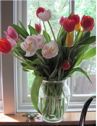 Tulips mothers day flowers in glass vase photo.PNG