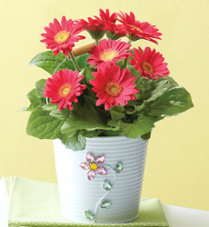 Pink Gerbera in a Jeweled Planter for mother's day.PNG